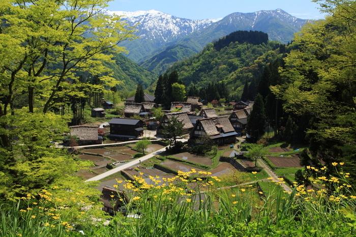 相倉合掌造り集落には、23軒の合掌造り家屋が現存しています。集落を取り囲む冠雪した山々、合掌造りの家々、なだらかな傾斜地に作られた水田が織りなす景色は、まるで絵画のようです。