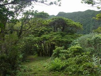 内輪山を一周できる「丸山遊歩道」は、青ヶ島の自然を身近に感じられる1周20分ほどの緑の小道です。野鳥にも出会えるかも?