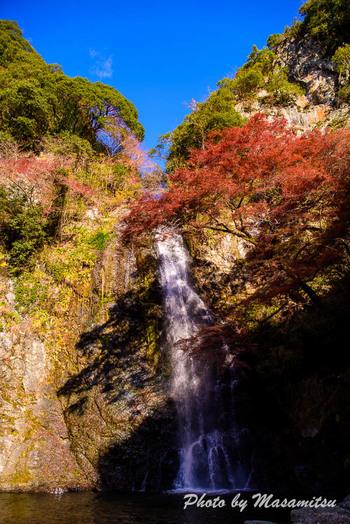 四季折々で美しい姿を見せてくれる箕面の滝ですが、紅葉シーズンの美しさは格別です。燃え盛る炎のような紅葉、滝口から流れ出る白いしぶき、苔むした岩壁が融和し、まるで錦絵のような素晴らしい景色を見ることができます。