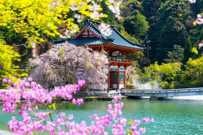 箕面市の山間部に鎮座する勝尾寺は、勝利祈願のご利益で有名な寺院です。朱色の山門とエメラルドグリーンに輝く水面を持つ弁天池が織りなす景色は絵葉書のような素晴らしさです。
