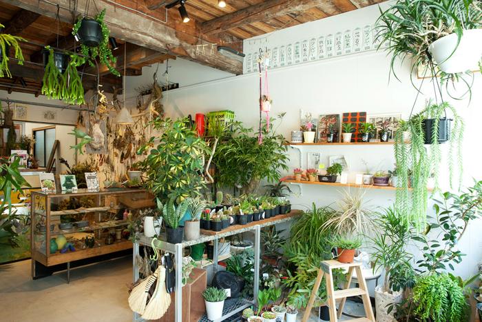 こちらは、仕入れから店番まで、すべて幸太郎さんがプロデュース。植物だけでなく雑貨やTシャツ、雑貨など様々なカルチャーを楽しめる空間