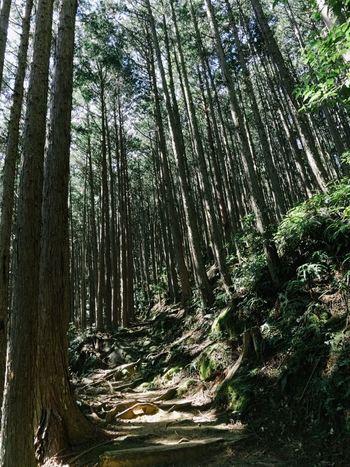 高くそびえる幾本もの杉の老木に囲まれた大門坂は昼間でさえも薄暗く、神秘的な雰囲気が漂っています。