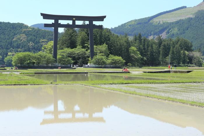 周囲を水田に囲まれた大斎原。稲の植え付け直前期には、水田が鏡のように大鳥居を映し出し、周囲の山岳風景と融和し、素晴らしい眺望が広がっています。