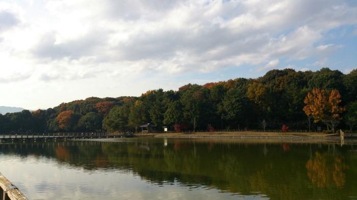 波一つない深田池の水面は、鏡のように周囲の樹々を映し出しています。深田池には、季節によっては、カモなどの渡り鳥が羽根を休めにやってきます。