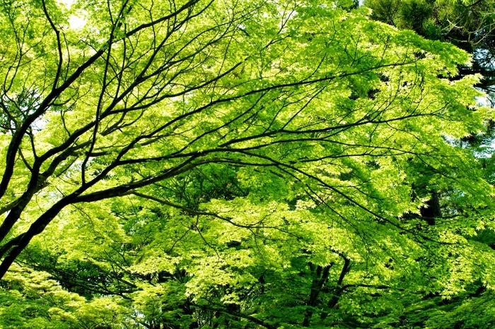 約300種類に及ぶ植物が植えられている萬葉植物園には、緑の樹々が生い茂っています。ここでは、ちょっとした森林浴を楽しむこともできます。