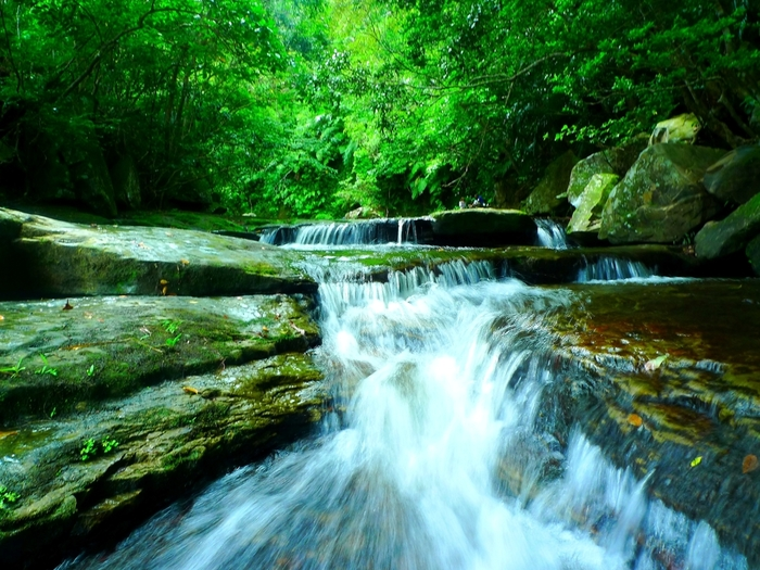 石垣島からフェリーで約35分。特別天然記念物「イリオモテヤマネコ」の生息地としても知られる西表島。島の90%を豊かな森が覆っていて、ここでしか見ることのできない珍しい生き物も多く住んでいます。ジャングル&滝のトレッキングなど大自然を満喫するエコツアーがおすすめです!