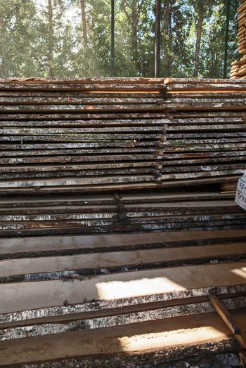 80年生きた白樺のバーチ材を乾かしている様子。バーチは、混合林の中で時間をかけて木の中身を充実させ、太く大きくなる広葉樹です(画像提供:アルテック)
