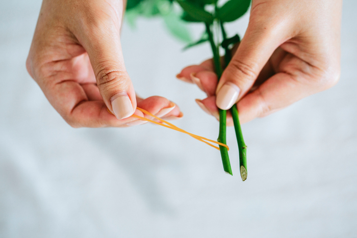 ② 位置をずらした茎の根元に輪ゴムを引っ掛けます。