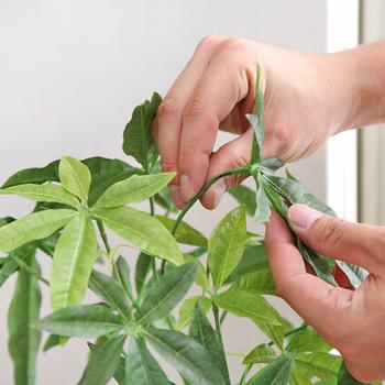 葉や枝の形状は手で曲げて表情を自在に変えられます。幹などもかなりリアルにできていて、パッと見フェイクとはわかりません。