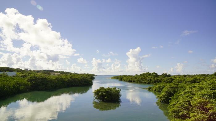 河口付近にマングローブ林が生い茂る宮良川は、石垣島南部を悠然と流れる島内最大の河川です。