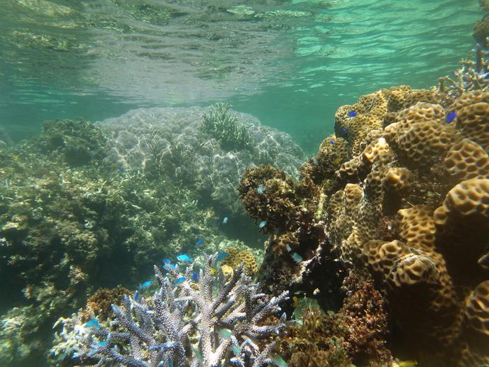 米原ビーチでは、浜辺から数メートルの位置にサンゴ礁が広がっています。そのため、シュノーケリングだけでも珊瑚や熱帯魚を見ることができ、初心者でも気軽に海水浴を楽しむことができます。