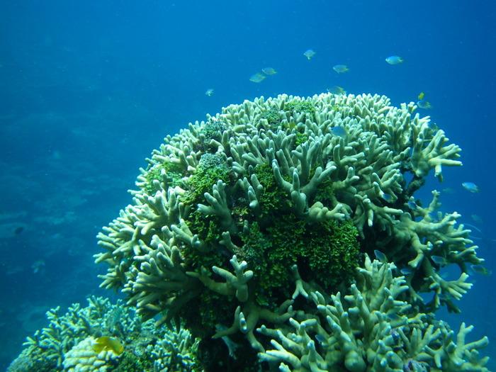 まるで樹木が枝葉を広げたかのような姿をした珊瑚、その間を自由に泳ぎ回る色鮮やかな熱帯魚たち、太陽光を浴びて碧く輝く海水……。海の中には、美しく神秘的な世界が広がっています。