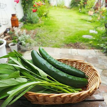 キュウリにナス、トマトなど、色鮮やかな夏野菜。 暑さに負けない体を支えてくれる成分たっぷりな夏野菜を、ご自宅でも育ててみたいですよね。 採れたて野菜の瑞々しい味わいも魅力的! 通常夏野菜の植え付けは春先が多い中、6月に入ってもまだ間に合う野菜を育てて、食卓に彩りを添えてみませんか?