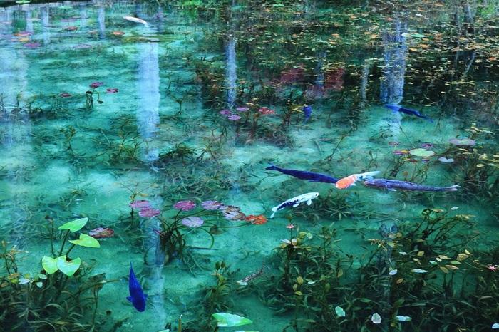 日の当たり方によって、水のブルーも濃淡がさまざまに変わり、いつ行っても趣の違う美しさに出会えます。この池を見るためだけに、遠くから多くの人々が訪れるというのがうなずけます。