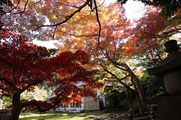 紅葉の季節はとくにおすすめ!木々を色鮮やかな葉っぱたちが飾ります。