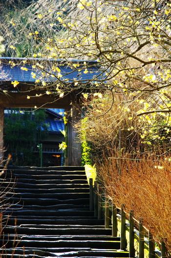 紫陽花寺と言われ、梅雨になると数えきれないほどのあじさいが咲き乱れます。秋冬はとても静かで、枯山水の庭園や瓶ノ井庵(鎌倉十井の一)があります。