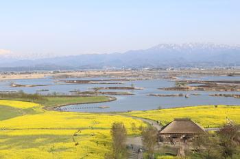 新潟市には国の天然記念物のオオヒシクイが生息しています。そして市内の東側にある福島潟は県内でも最大規模の湖沼で、山と湖と緑あふれる環境が揃った気持ちのいいスポットで、オオヒシクイが越冬をするのにも有名な場所です。