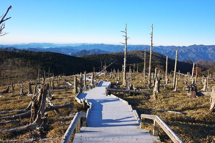 立ち枯れの木に覆われた正木峠は、訪れる人に忘れることのない強烈な印象を与える場所です。「森の墓場」を彷彿とさせるこの地は、わずか50年前までは、トウヒが豊かに生い茂る深い森でした。