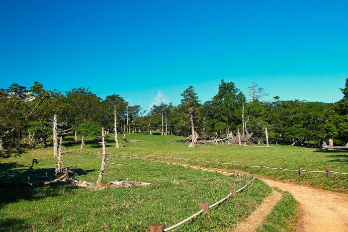 開けた眺望の牛石ヶ原は、起伏が少なく、大台ケ原の中でも歩きやすい場所です。また、牛石ヶ原をハイキング途中の休憩スポットにするのもおすすめです。