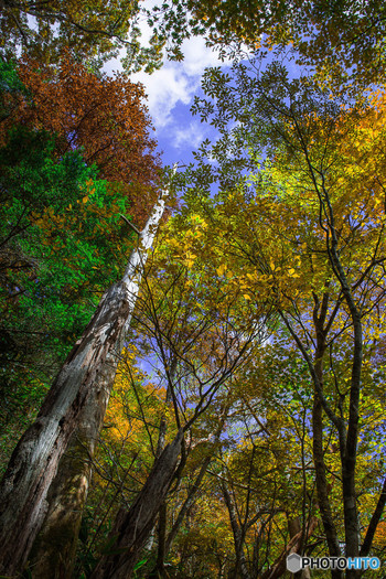 シオカラ谷をとうとうと流れる清流の傍には豊かな森が生い茂っています。四季折々で美しい景色を見せてくれるシオカラ谷ですが、落葉樹が紅葉する秋の美しさは格別です。