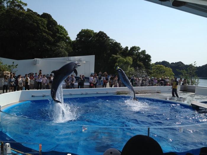 海きららでは、ダイナミックなイルカショーのほか、九十九島の海に生息するさまざまな生き物に会えます。