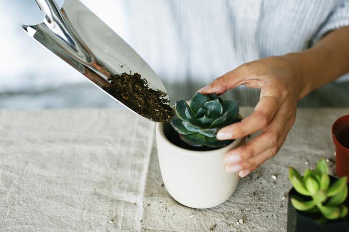 いつも暮らしのそばにいる。多肉植物とはじめるボタニカルライフ  ―ex.(イクス)×キナリノモール―