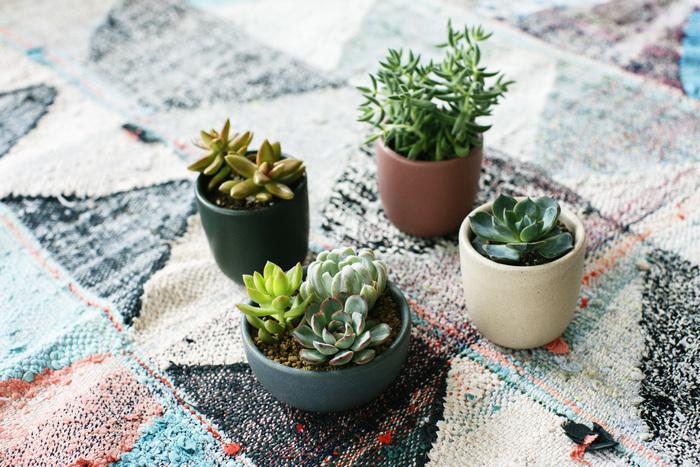 小さくても存在感があるので、床に置いても映えますよ。同系色のラグを敷いて、おしゃれにコーディネート。上から見る多肉植物も、またかわいい。