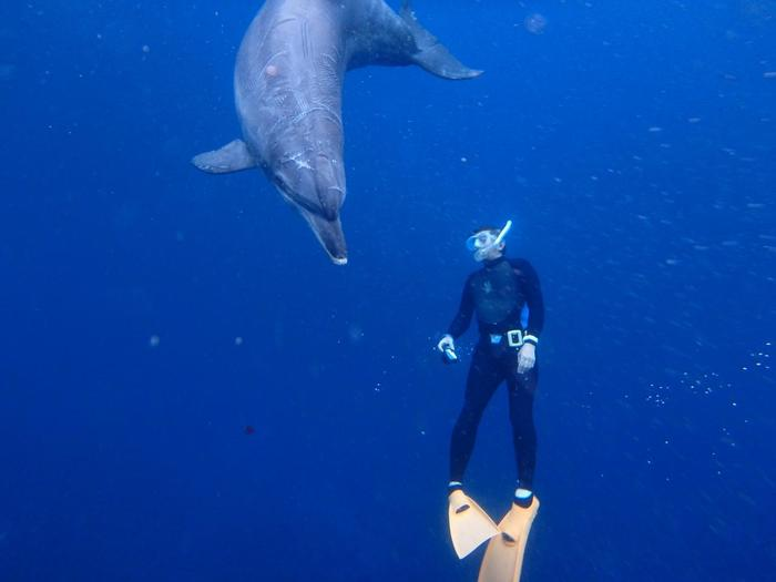 ただし御蔵島では、永くイルカと人間がよい関係をた保つために、イルカウォッチングのルールが定められているので、それらを事前に確認しておきましょう。