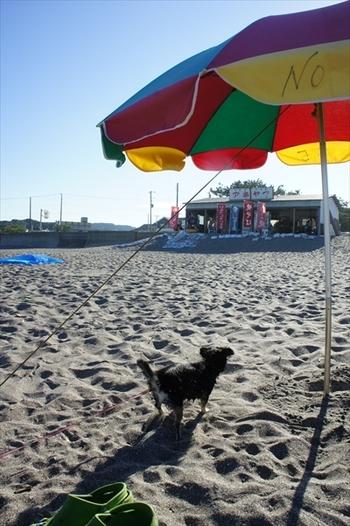 海の家は4軒程あり、パラソルなどもレンタルできます。わんちゃんの為にも、日陰づくりと水分補給をお忘れなく!