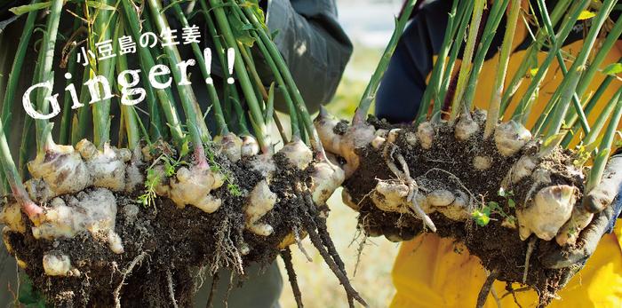 小豆島に行けなくても、HOMEMAKERSのオンラインストアでは旬のお野菜から、ポン酢などが購入できます。