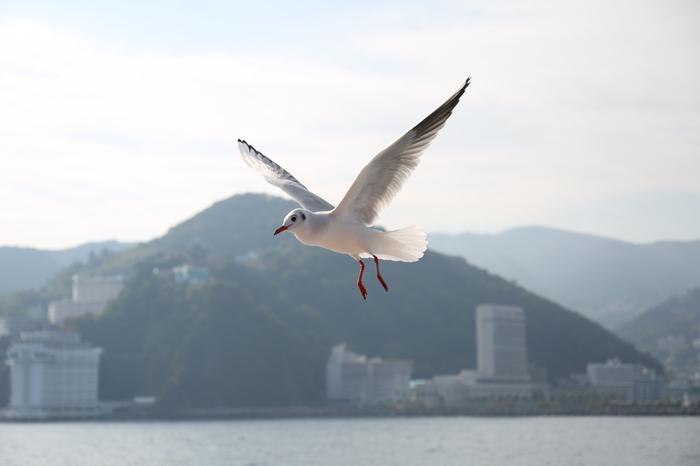 今や熱海は、都心からも近くて気軽に行けるリゾート地として再び人気が高まる場所です。 ビーチや温泉もいいですが、せっかく熱海へ来たのなら、東京では味わえない自然豊かな景観や、歴史ある建物や美術に触れる旅も、きっと素敵な思い出になりますよ。是非皆さんも、今年の夏は熱海でバカンスを過ごしてみてはいかがでしょう。