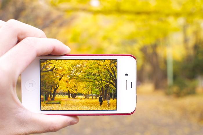都心部からわずか3km程度の場所に広がる、緑深い円山原始林。そのふもとに広がる円山公園は、明治初期に開拓史が樹木の試験場として設けたのが始まりです。春には桜、秋には紅葉が美しく、リスや野鳥などにも出会える緑のオアシスです。