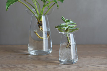 ヒヤシンスやアボカド、多肉植物など、お好みに合わせてSサイズとLサイズ、カラーもクリアとブルーから選べます。上部のお皿と下部の容器の2つのパーツで構成されているので、お皿が取り外せば、植物に直接触れることなく水の交換ができます。