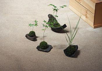 こちらは「季節のワークショップ」の、茶花のお稽古 「山野草と苔庭」より。山野草を、自分の手で植え、実際に育てるまでを学ぶ講座が開講されました。