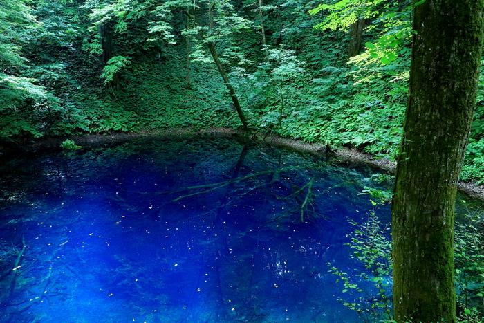 ここも神の子池と同じように青い湖面が美しい場所です。通称青池、その通りのキレイなブルーの水の下には枯れ木がそのまま沈んでいます。行くまでの道のりはちょっと遠いですが、だからこそ、行ってみる価値ありの場所ですよね。