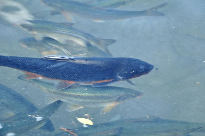 お魚が泳いでいるのも見えるとっても水のきれいな湖です。