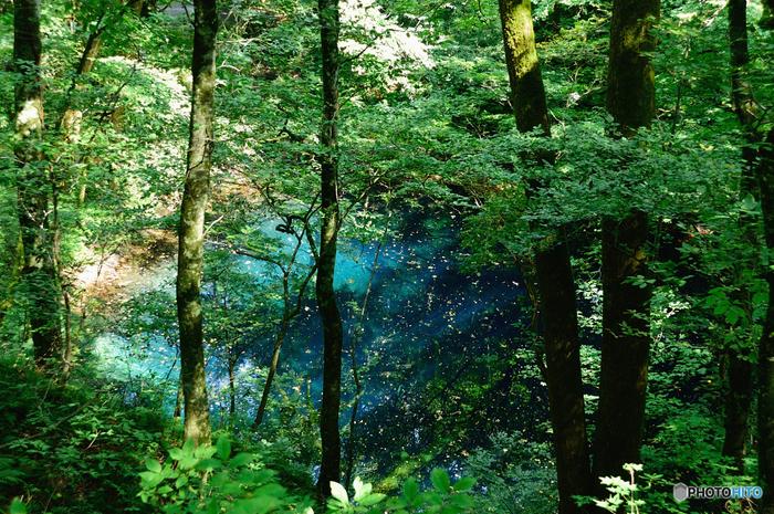 ブナの自然林に囲まれた雄大な自然の中にある青池。この十二湖地域は森林浴によるリラックス効果が認められる「森林セラピー基地」としても認定されているそうです。体力に合わせて様々な散策コースがチョイスできます。