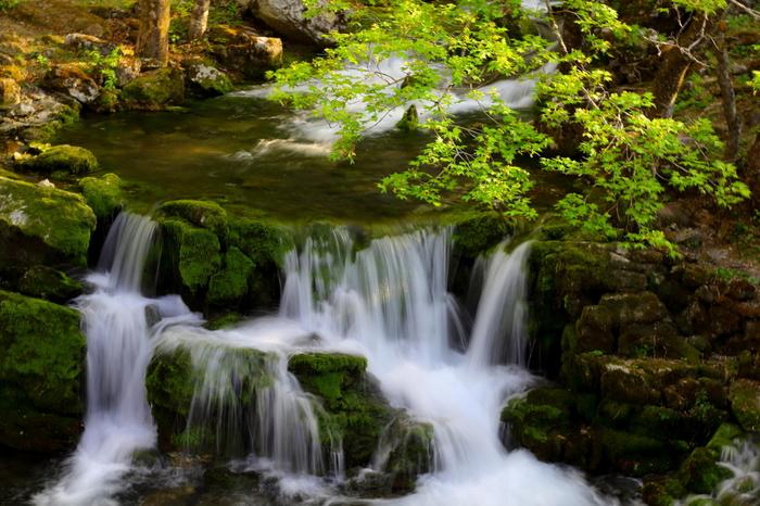 地底湖だけでなく龍泉洞洞口付近からは平均毎秒1.5トンもの水が湧き出ています。その水質は日本名水100選に選ばれるほどなんです。