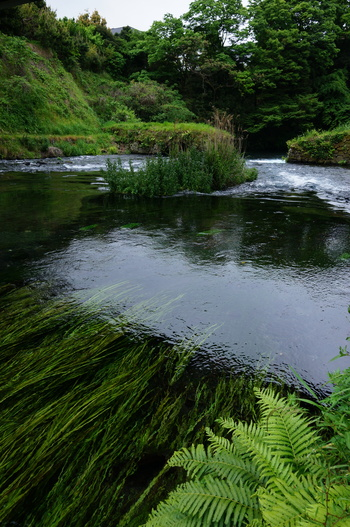 湧水はとても澄んでいてその水量も豊か。12月ごろには鮎の遡上も見られるそうです。