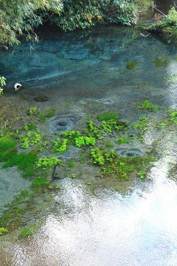 プクプクとあちこちから水が湧き出ている様子が見られます。独特の青い色をしているのは地質鉱物がが土壌に含まれているからだそうです。