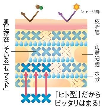 """「ヒフミド」 エッセンスクリームの最大の特長は、人の皮膚に存在するセラミドと全く同じ構造のセラミド""""ヒト型セラミド(※2)""""が配合されていること。しかもその保水力は、多くのスキンケアアイテムで使用されている合成セラミドの約3倍(※3)。同じ構造なので、角質層に自然に浸透し、保水力を発揮してくれるのです。角質層が潤うことでバリア機能がアップ。紫外線にも負けない肌へと導いてくれます。"""