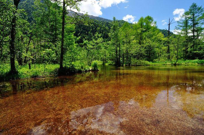 みずみずしくおだやかな湿原の中にある透明感抜群の浅い池が「田代池」です。河童橋から徒歩でおよそ20分の距離にあるので、あまり時間がない方でも訪れることができそう。