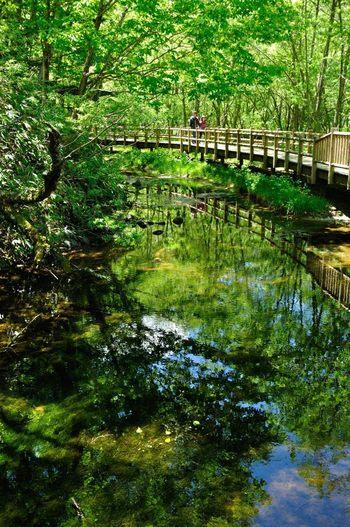 中部山岳国立公園の一部にもなっており、 日本の貴重な「風景の財産」として国の文化財の特別名勝・特別天然記念物に指定されています。