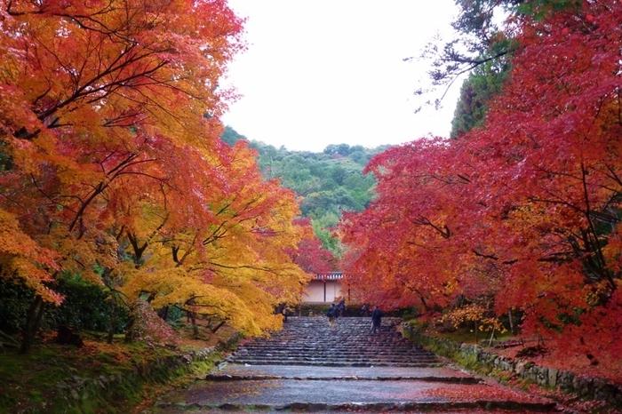 「紅葉の馬場」と呼ばれる二尊院の参道では、秋になると見事な紅葉を見せてくれます。色とりどりの落ち葉がちりばめられた参道両横には燃え盛る炎のように深紅に染まった紅葉が、赤いトンネルを作り、眼前の景色は絵葉書のような素晴らしさです。