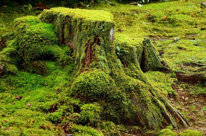 境内境内を覆う緑の苔は、二尊院が持つ悠久の歴史を私たち参拝者に物語っているかのようです。
