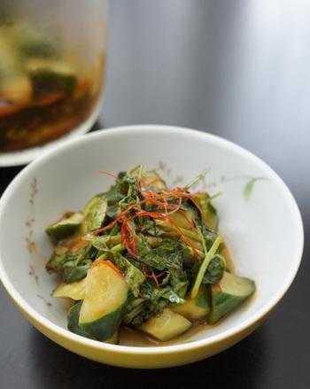 夏野菜であるきゅうりと一緒に浅漬けにすればパクチーの香り広がるエスニックな浅漬けになりますよ。