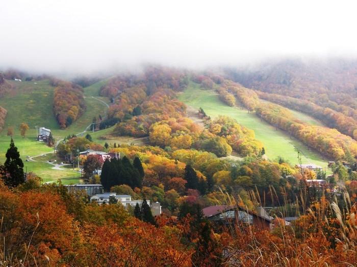 秋になると、蔵王温泉では、トウヒ、ブナ、ナラなどの落葉樹が次々と紅葉してゆきます。緑の葉が日を追う度に色座鮮やかな紅色へと変貌してゆく様は、山々が美しい秋錦へと衣替えをしているかのようです。