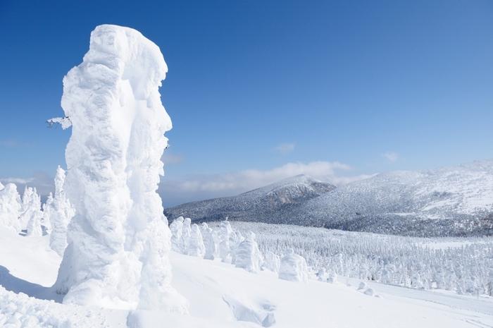 「モンスター」とも呼ばれる蔵王の樹氷の正体は、蔵王連峰に自生するアオモリトドマツがすっぽりと雪に覆われた姿です。もともと樹木であることが分からないほど、雪に包まれたモンスター達が無数に並んでいる様は、迫力満点です。