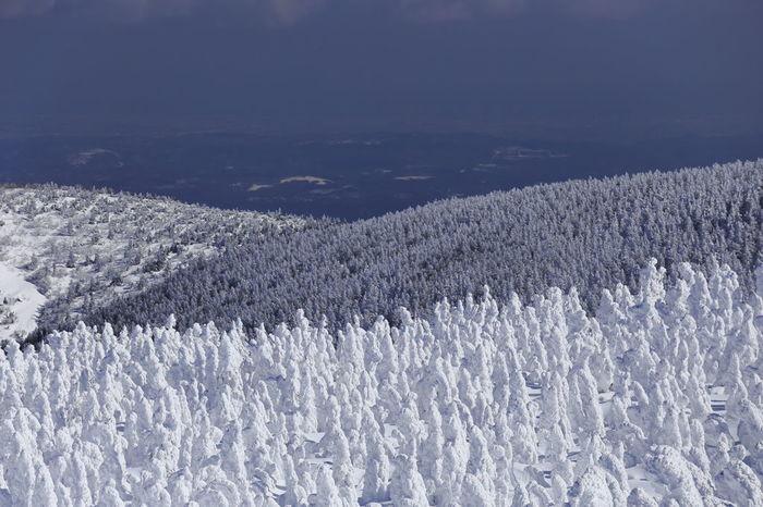 """""""蔵王""""と聞くと、まず最初に""""樹氷""""を思い浮かべる方も多いのではないでしょうか。蔵王連峰を一面に覆い尽くす樹氷林は、蔵王を代表する冬の風物詩です。"""