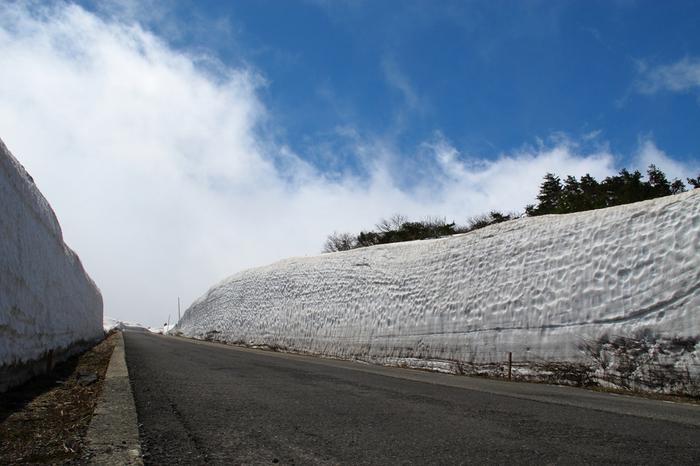 春が訪れる頃、蔵王エコーラインは雪の回廊と化します。道の両側には高さ5メールから10メートルに及ぶ雪の壁が立ちはだかり、まるで雪の女王が住む国へ迷い込んだような気分を味わうことができます。